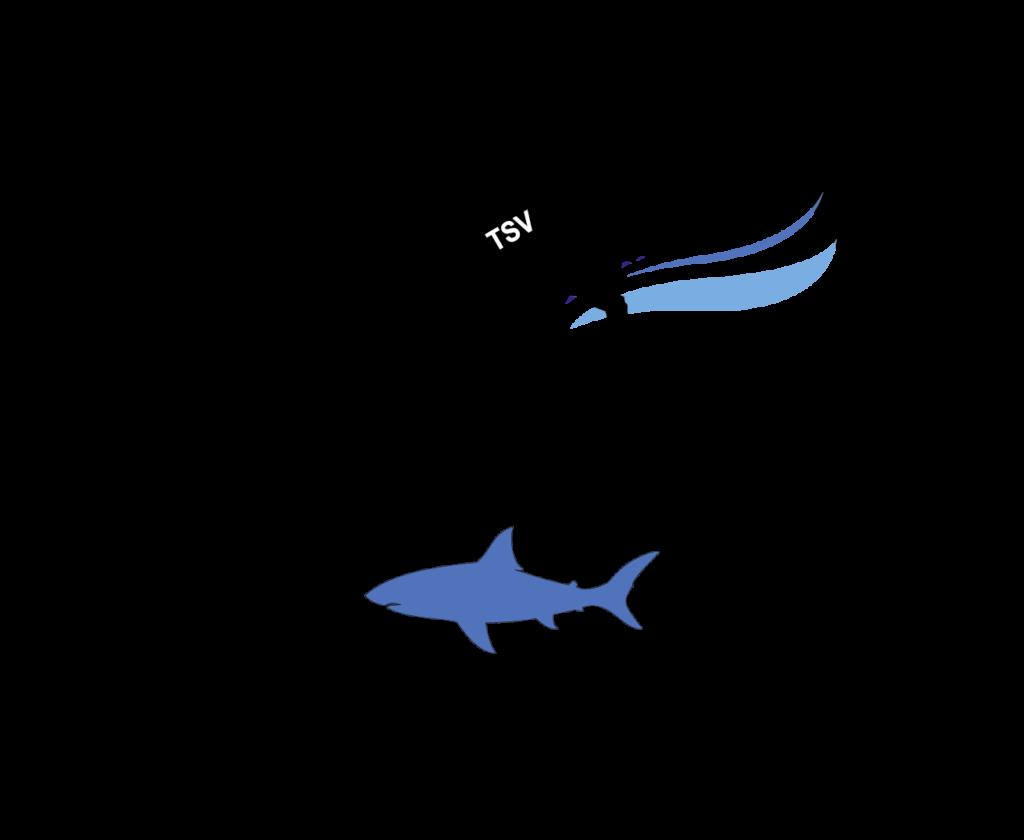 TSV Atlantis e.V.